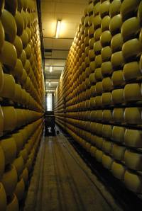 Alley of Parmiggiano Regiano