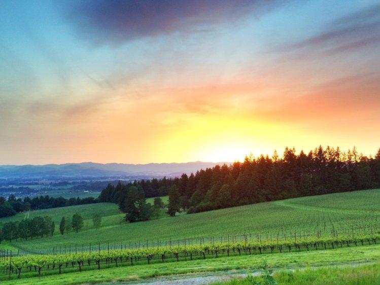 Evenstad Estate at sunset
