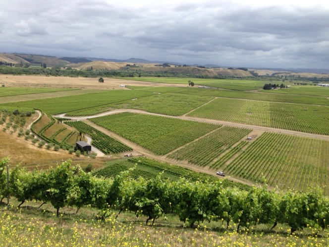 Bilancia vineyard view 2