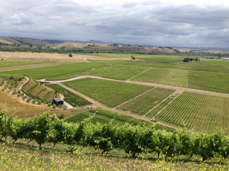 Bilancia vineyard view 2