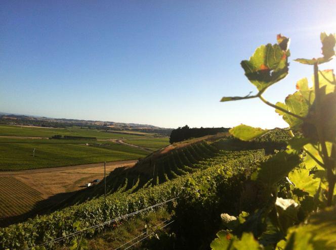 Bilancia vineyard view Syrah