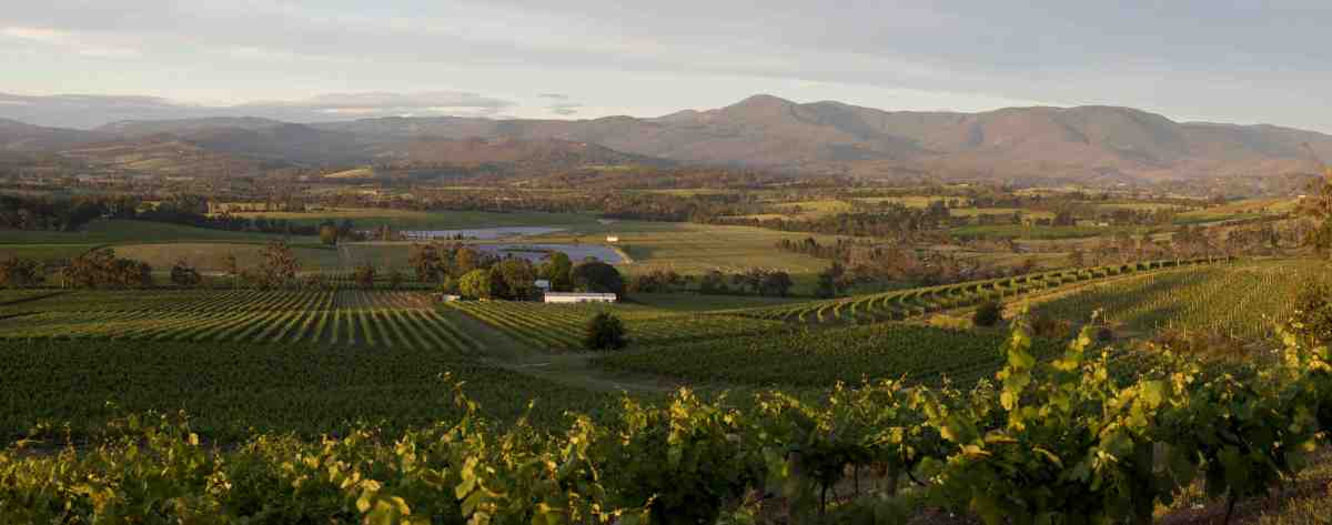Yarra Valley cellar doors - where to go
