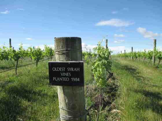 Stonecroft Syrah vines