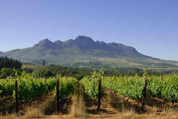 WOSA Helderberg, vinyards and mountain
