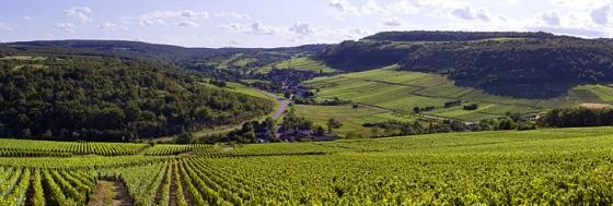 BIVB Chardonnay Saint Aubin - credit BIVB