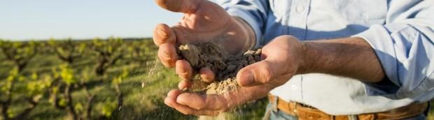 Yangarra dirt