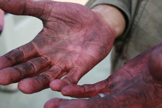 Winemaker's hands (Gary Mills) credit Kate Bisset Johnson Photography los res
