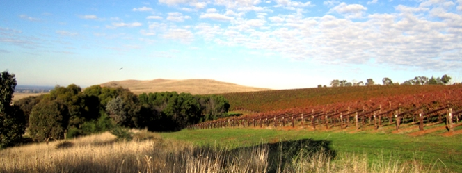 Chalmers Project Colbinabbin Vineyard Heathcote