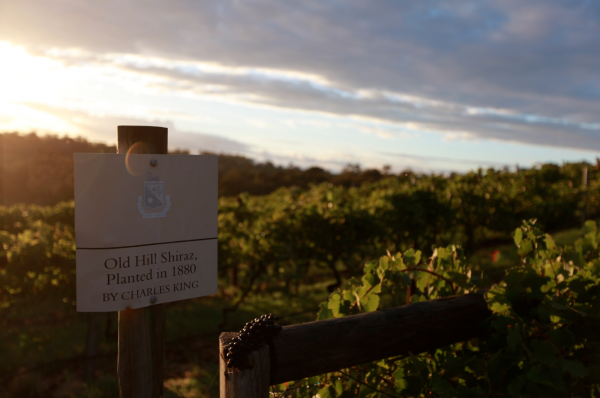 Old Hill Vineyard, Mount Pleasant. Credit: Mount Pleasant Wines.