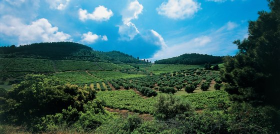 New Wines of Greece Domaine Porto Carras