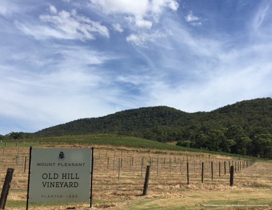 hunter-valley-mt-pleasant-old-hill-vineyard