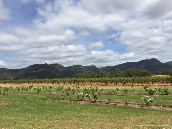 hunter-valley-tyrells