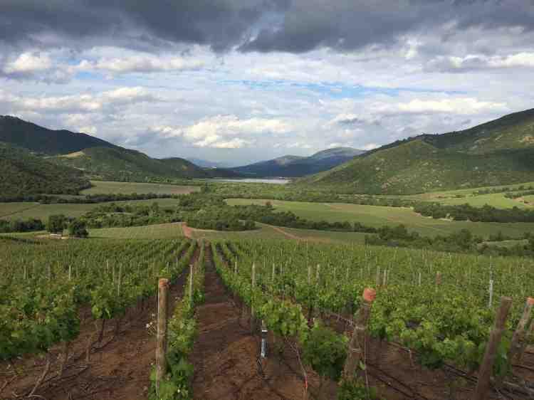 Vineyard locations at Viña Vik in Millahue